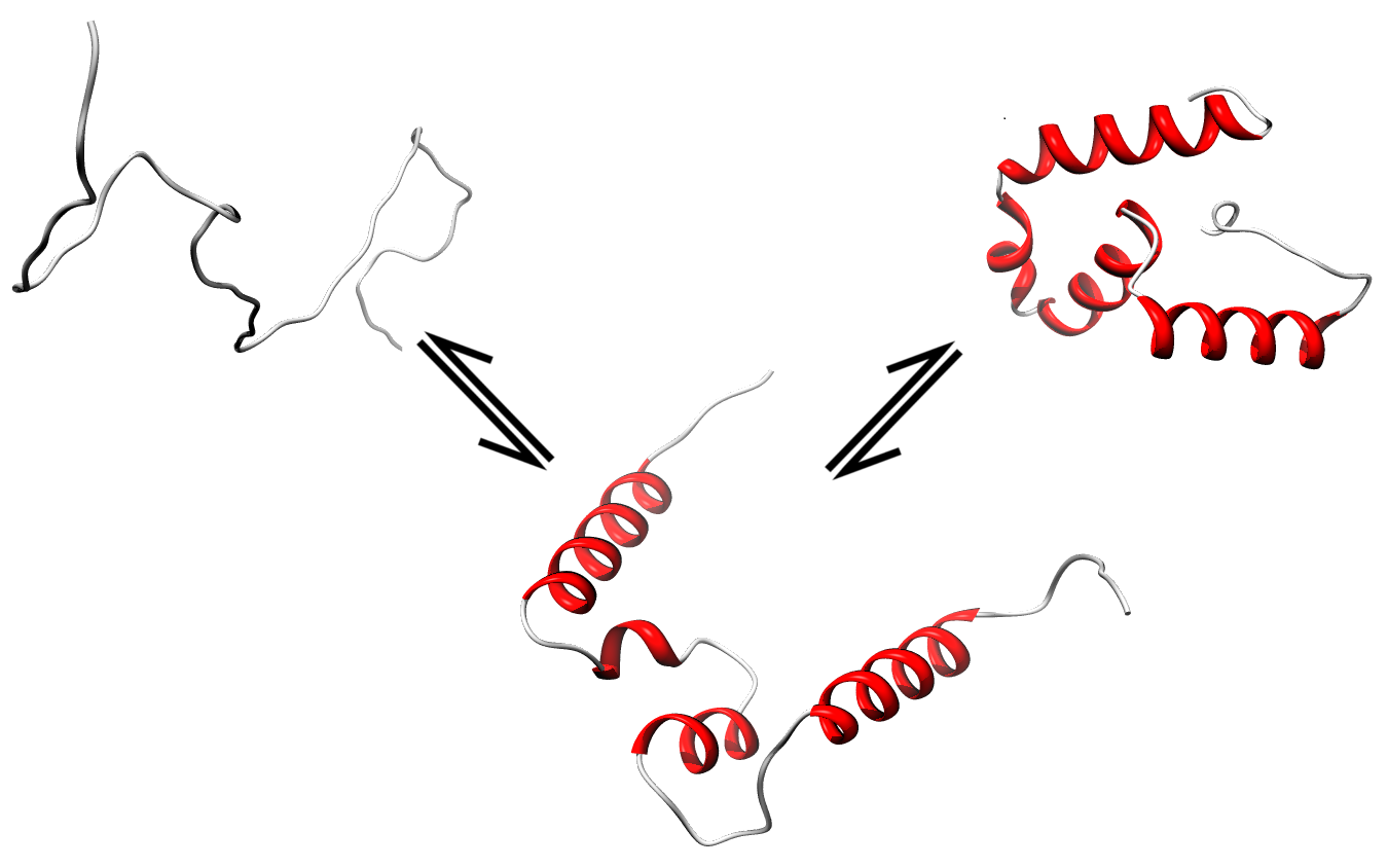 protein modification discussion Amino group modification involves the addition of a functional group at the n terminus of the amino acid a protein after its translation undergoes a chemical.
